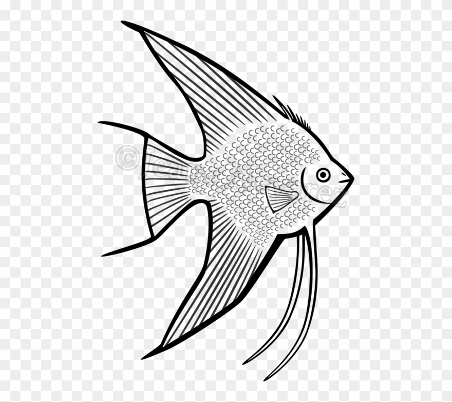 Angel fish coloring page - timeless-miracle.com | 782x880