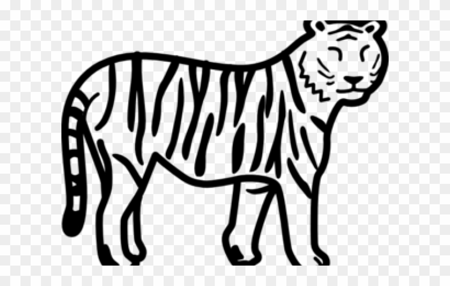 Save Tiger Easy Drawing Clipart Full Size Clipart 1183370 Pinclipart