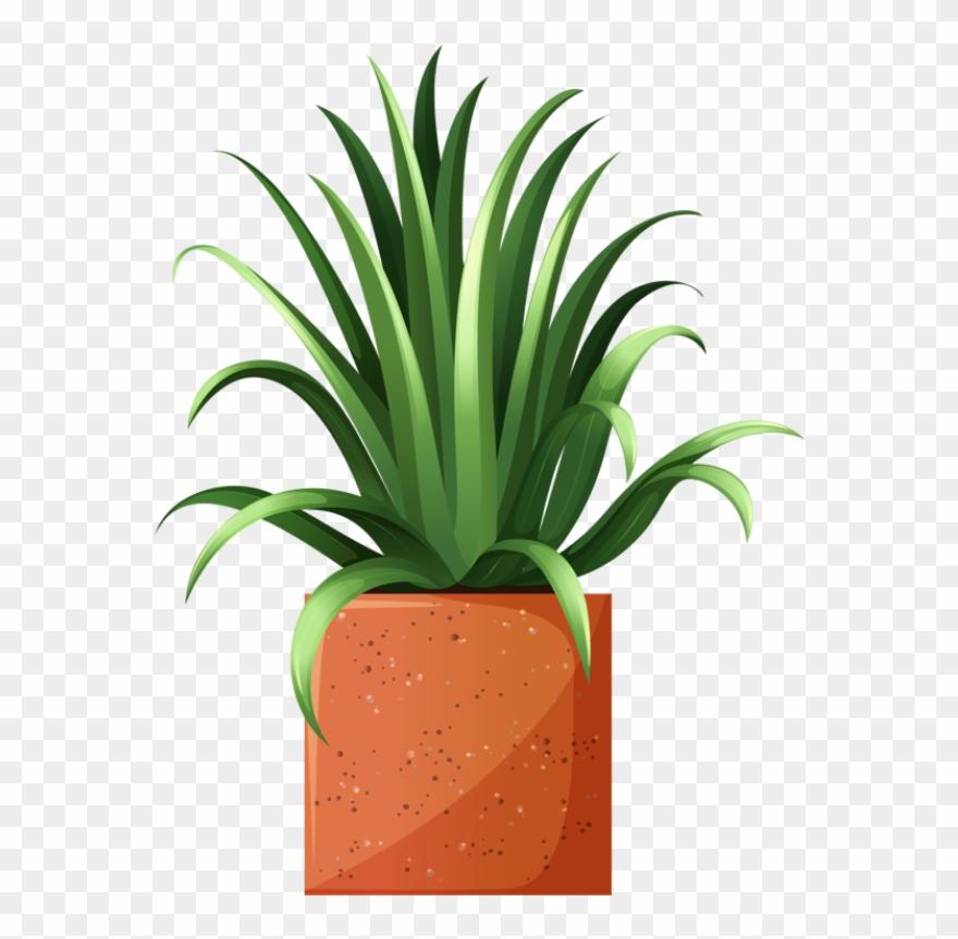 houseplants in macrame hangers - Download Free Vectors, Clipart Graphics &  Vector Art