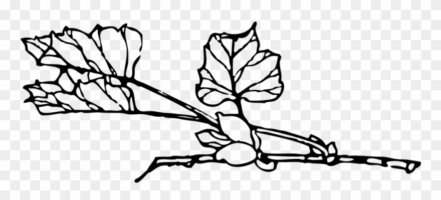 Rose Vine Drawings 20, Buy Clip Art - Plant Branch Outline - Png Download (#1192006) - PinClipart