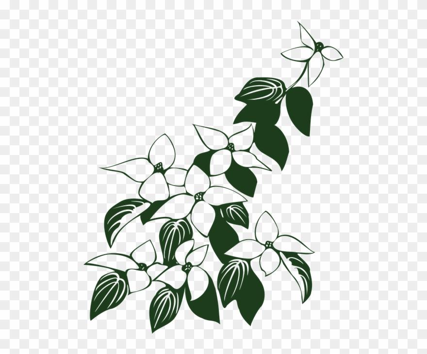 Dogwood Blossom Clip Art