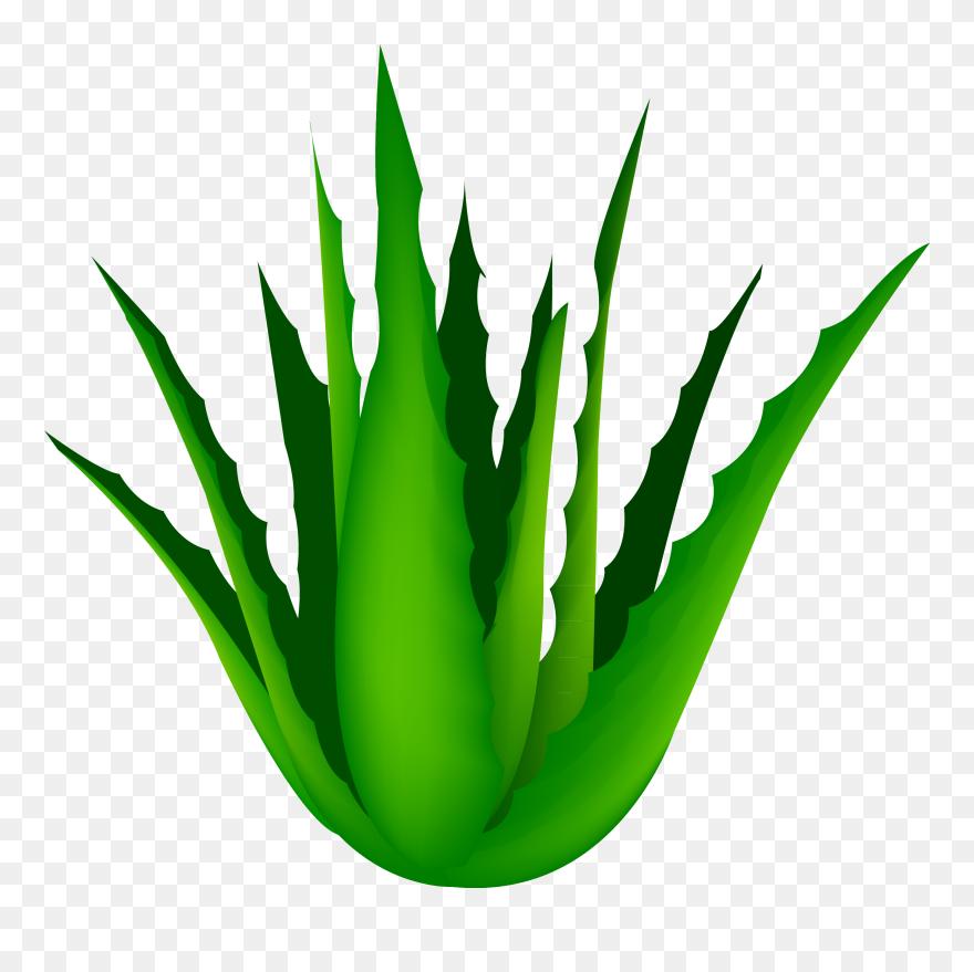 Clip Art Free Agave Vector Cartoon - Transparent Aloe Vera Png