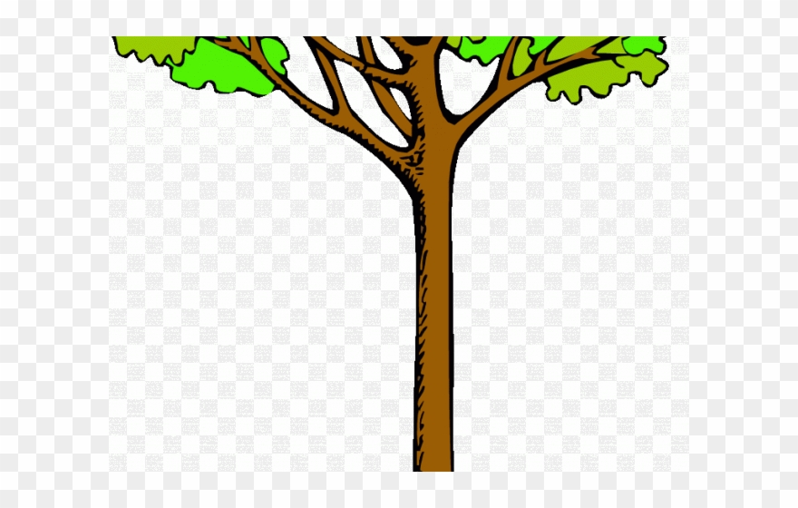 Trees tall. Tree clipart kauri png