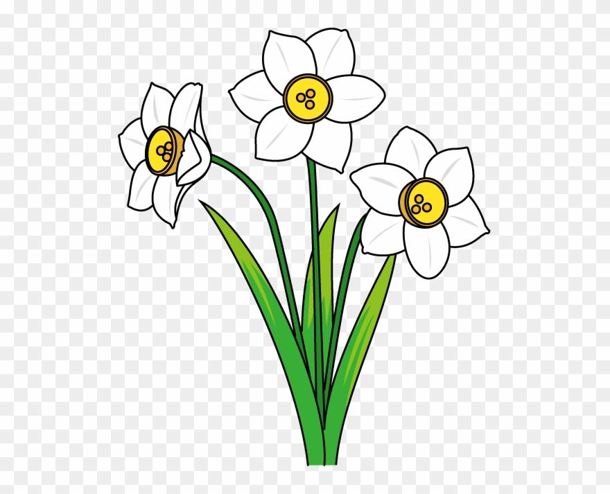 冬の花1 02 スイセンイラスト 水仙 イラスト フリー Clipart 1225981