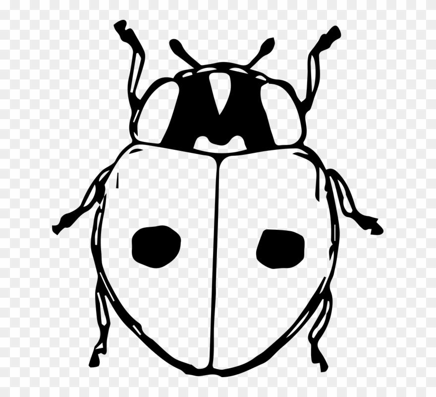 Black And White Ladybug Clipart 9 Buy Clip Art Kumbang Gambar Hitam Putih Png Download 1251429 Pinclipart