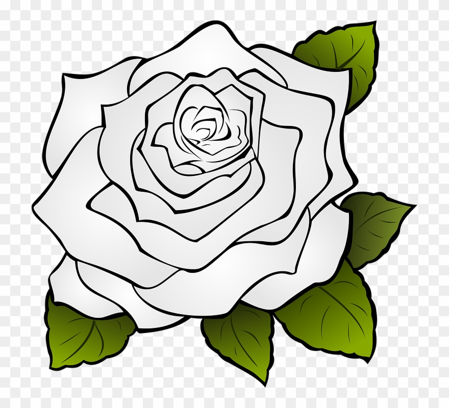 Rose Flower Drawing 11 Buy Clip Art Transparent Rose Outline