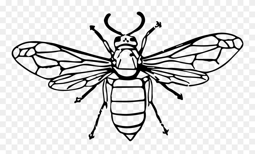 Hornet Bee Insect Wasp Drawing