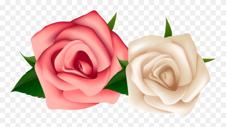 Red Roses - Red And White Rose Png Clipart