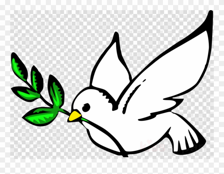 Bird dove. Peace clipart pigeons and