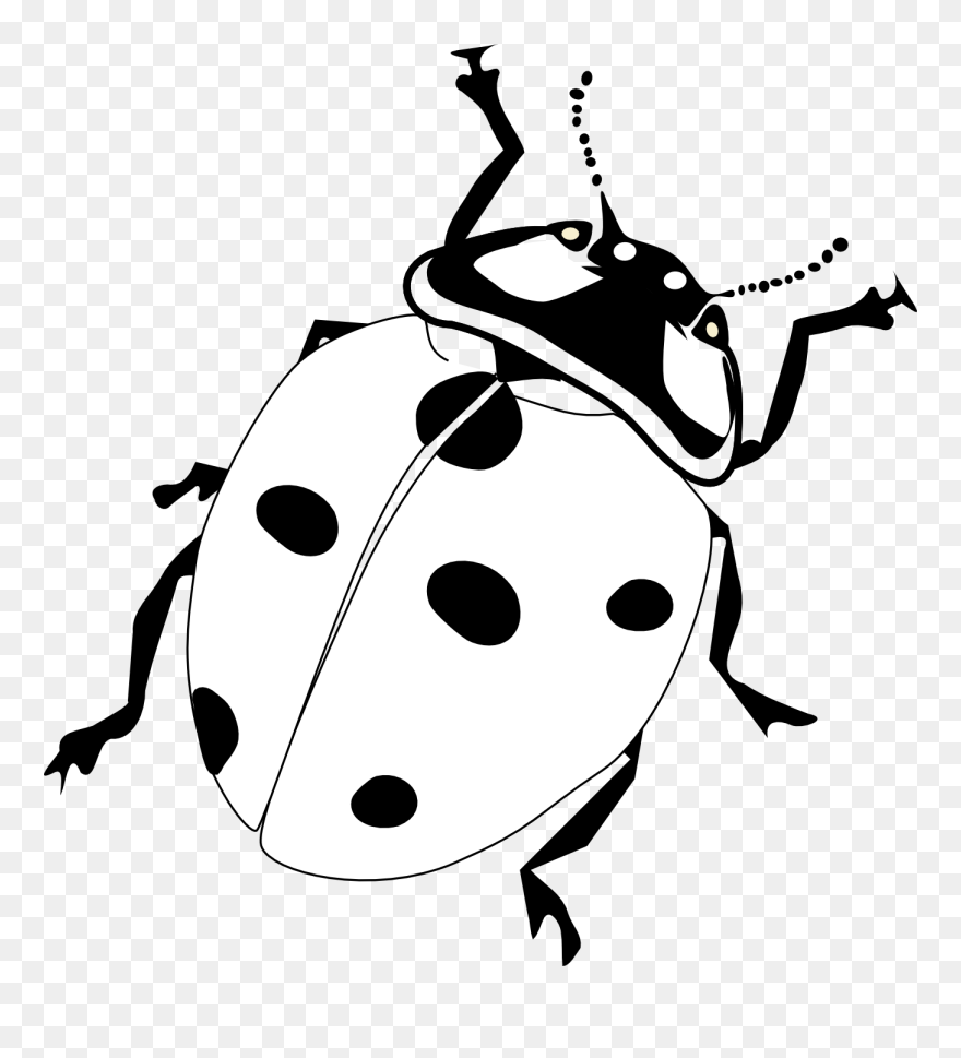 graphic regarding Printable Ladybug named Down load Absolutely free Printable \