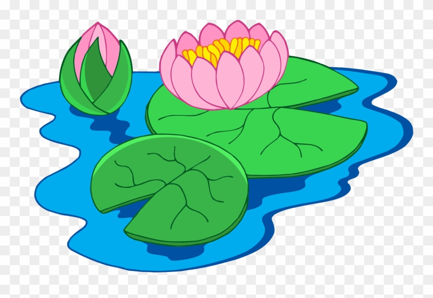 Nymphaea Alba Clip Art - Clip Art Of Water Lily - Png Download