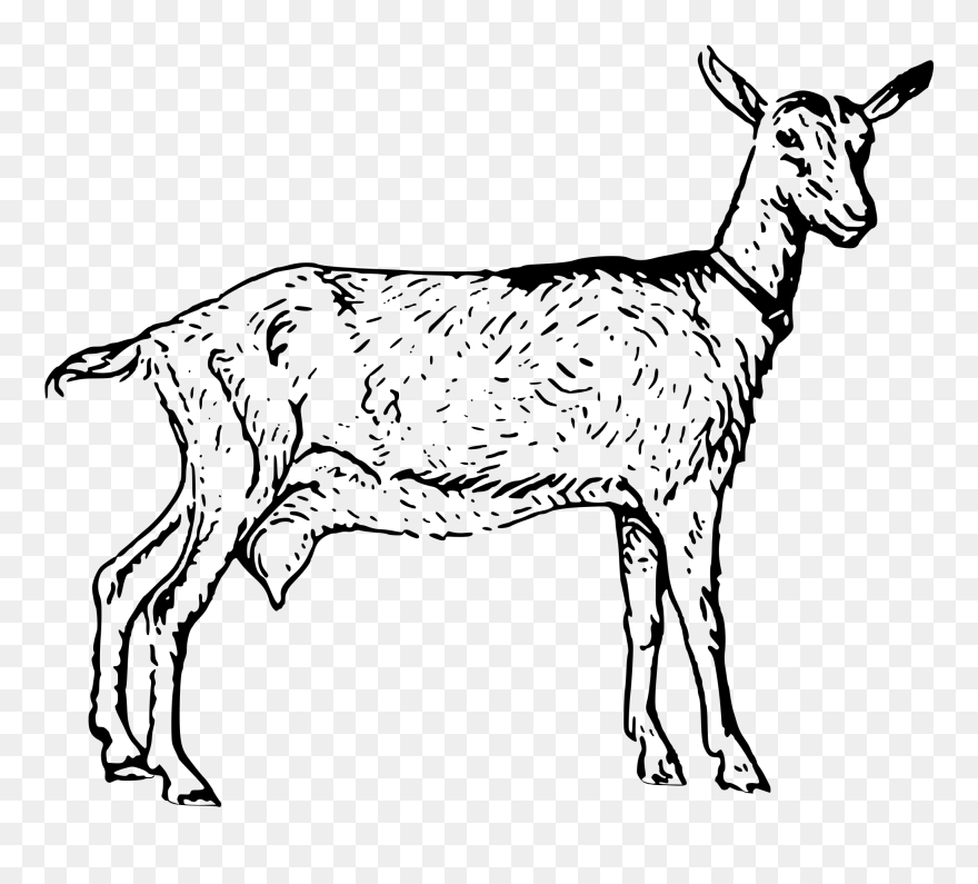 Goat Png 13, Buy Clip Art - Nigerian Dwarf Goat Black And