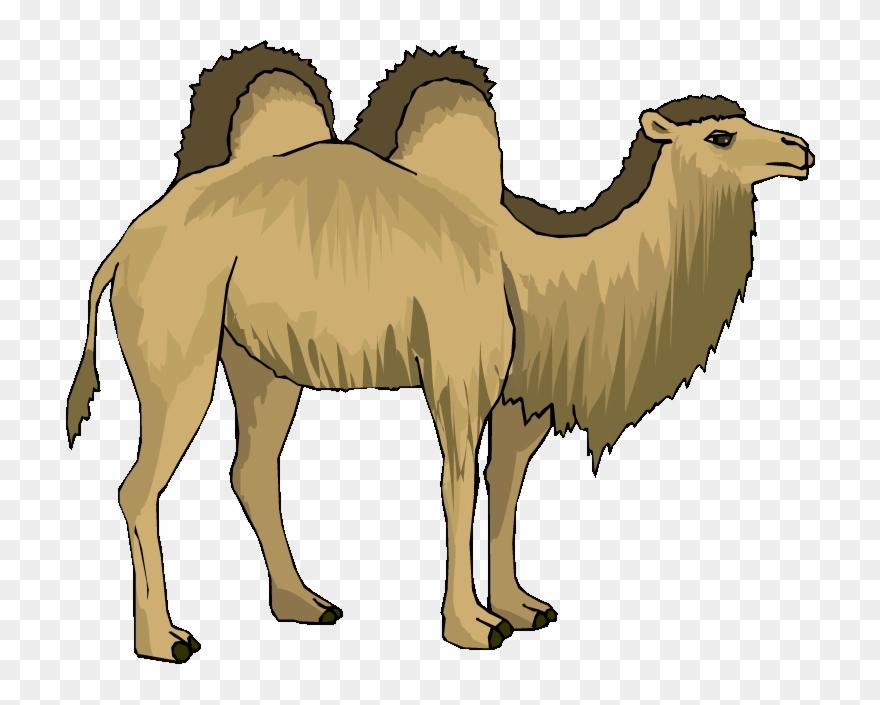 Camel clipart baby camel, Camel baby camel Transparent FREE for download on  WebStockReview 2020