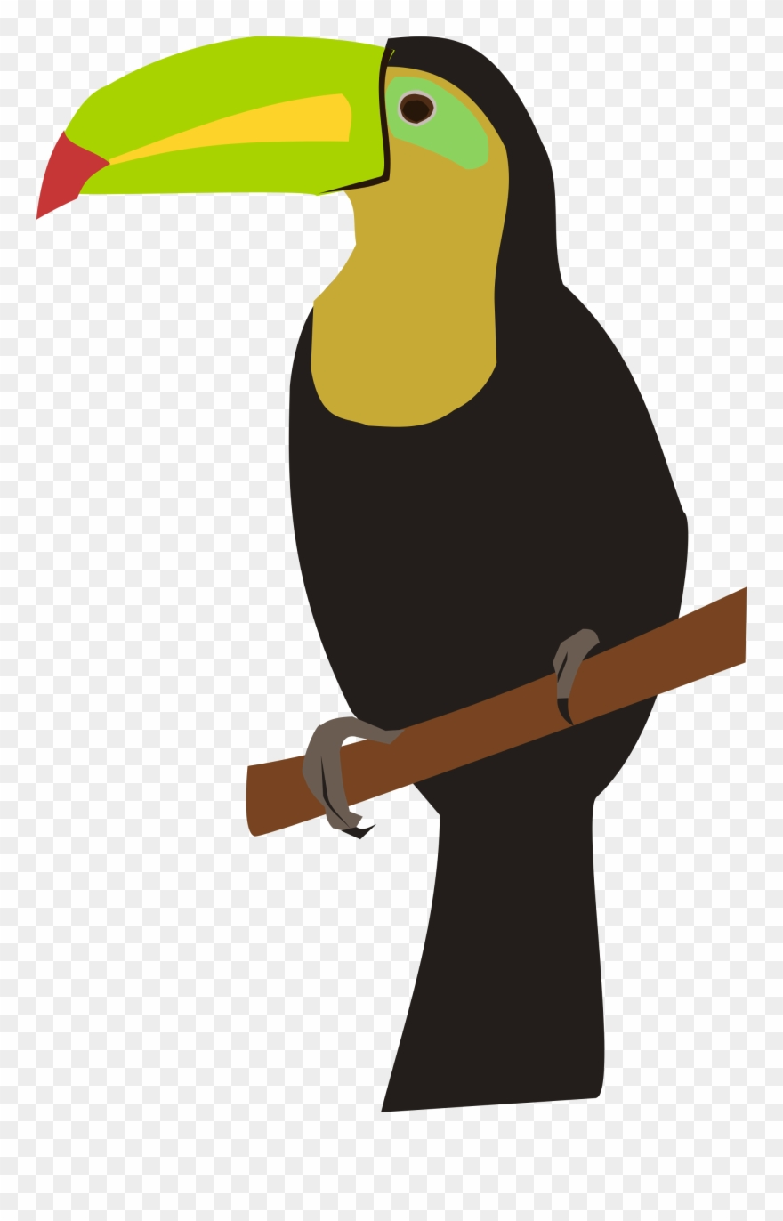 Cartoon Toucan Pictures 8 Buy Clip Art Drawing Png Download 1466462 Pinclipart