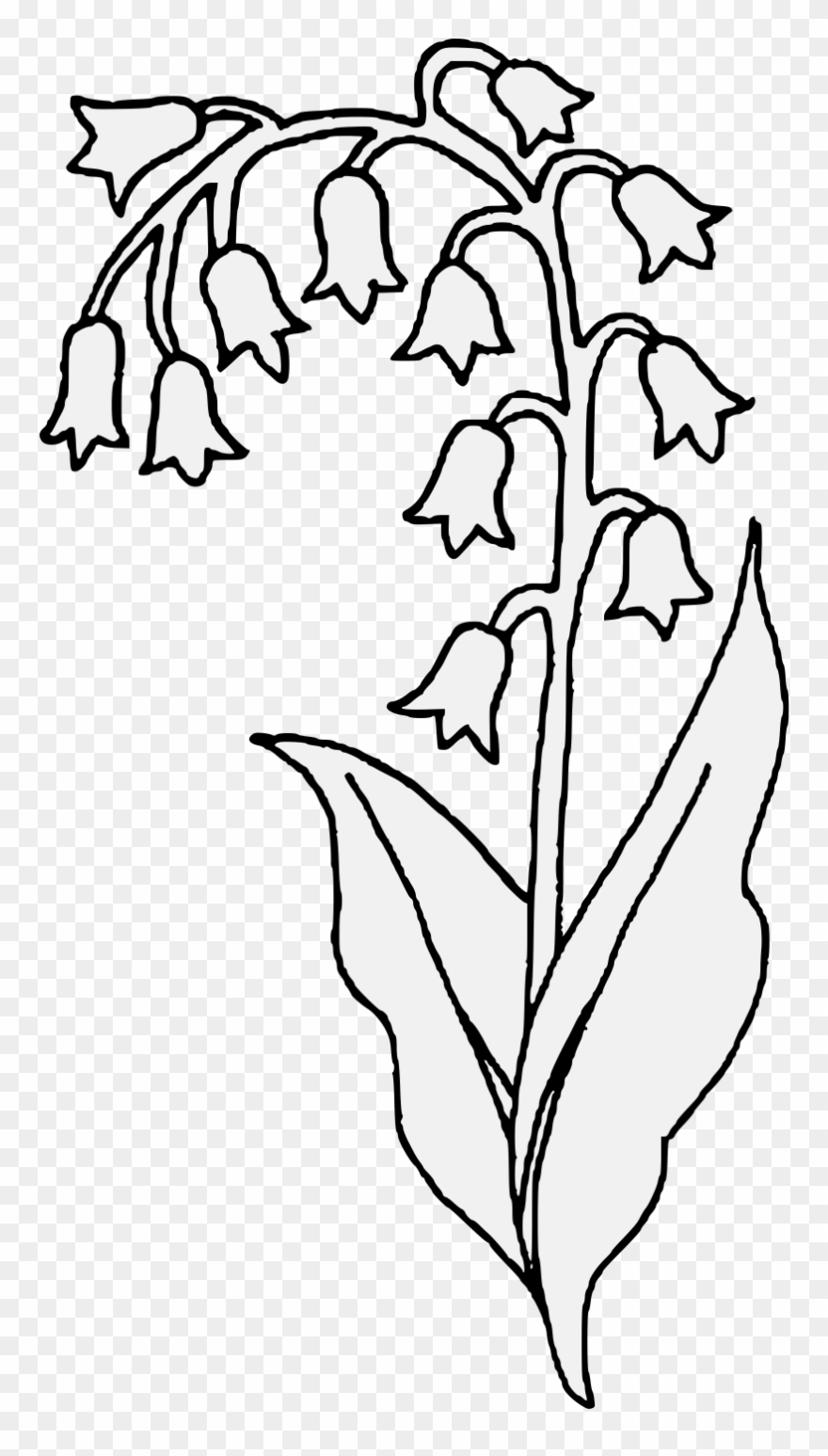 Lily Of The Valley Clipart Transparent - Lilies Of The Valley Sketch - Png Download