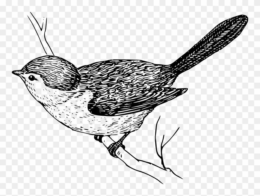Clip Art Tags Bird On Branch Drawing Png Download