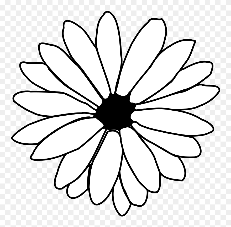 Flower black and white daisy. Cliparts clipart png download