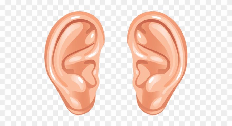 ear png transparent images - human ear ears clipart