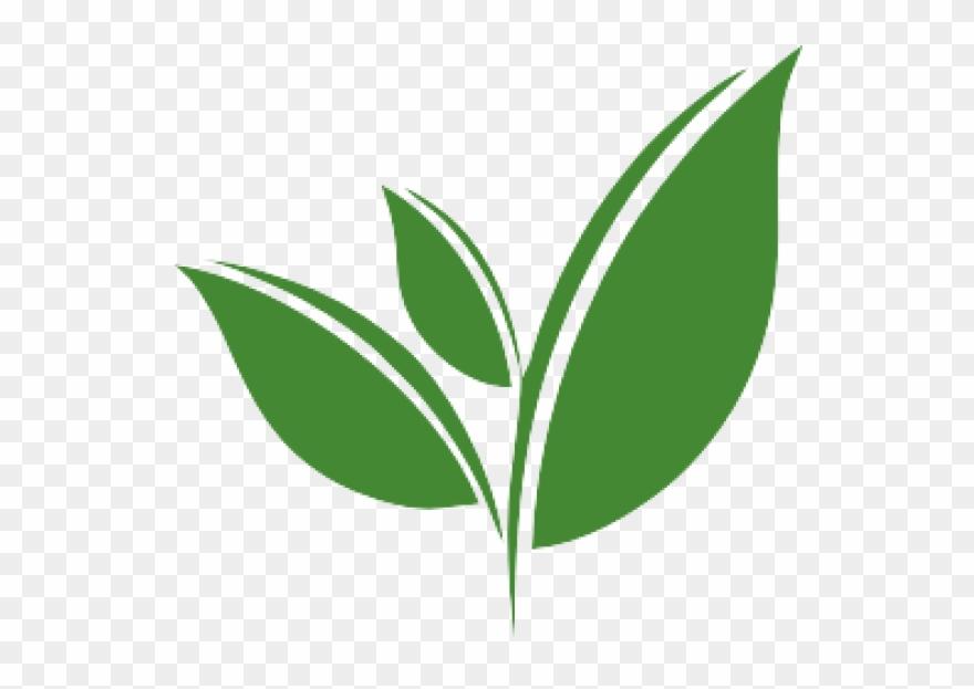 More Views - Tea Leaf Vector Png Clipart (#1546858) - PinClipart