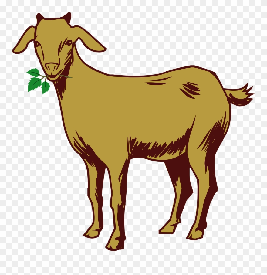 Free Goat Clipart 6, Buy Clip Art - Goat Drawing With ...