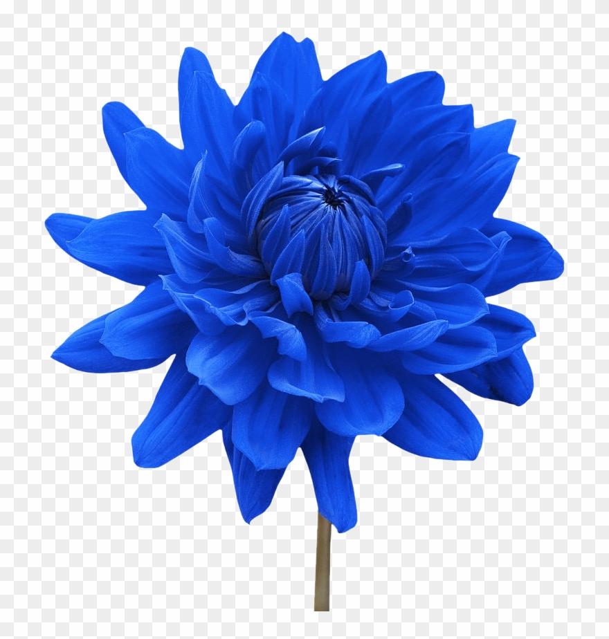 Png Single Flower Transparent Single Flower Png Images Blue