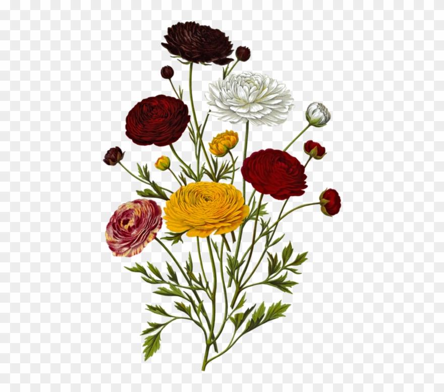 Toutes Les Fleurs Clip Art Botanical Illustration Png Download Full Size Clipart 1649308 Pinclipart