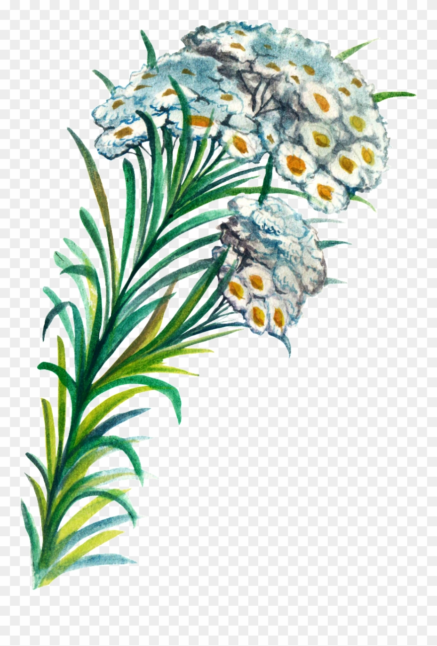Hand Painted Plant Cartoon Transparent Watercolor Png - Watercolor Painting Clipart