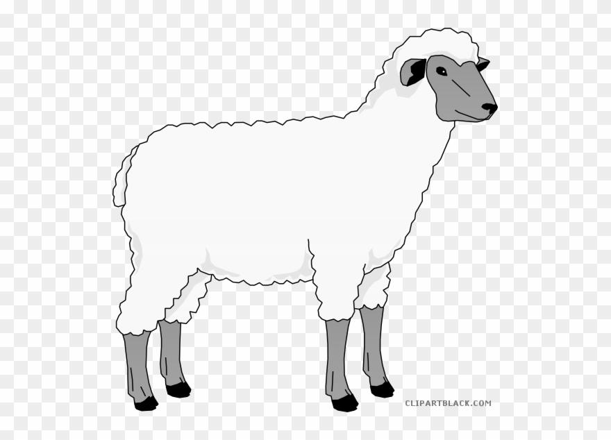 Sheep Clip Art Clipart Goat Merino Clip Art