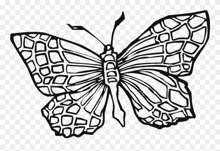 Butterfly Coloring Book Girls Transparency Coloring Pages Butterfly Clipart 1760109 Pinclipart