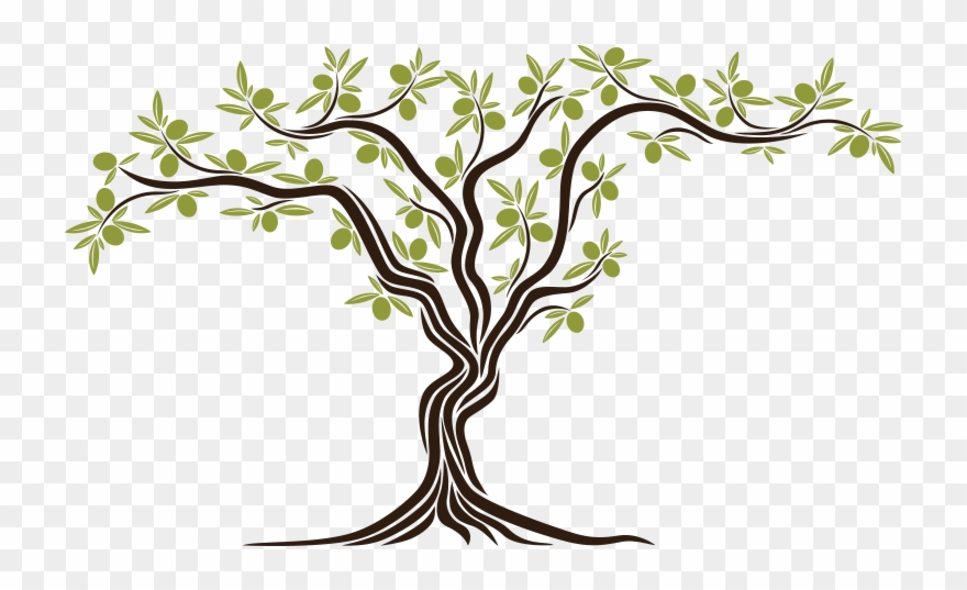 From The Seed An Olive Tree Sprouted Simbol Of Peace Olive