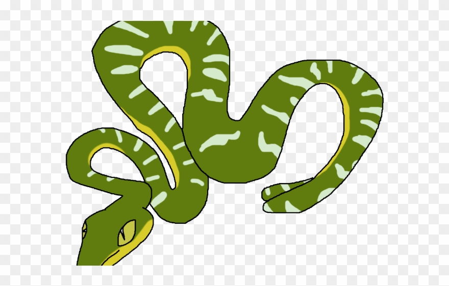 Tree Python Clipart Rainforest Snake - Emerald Tree Boa ...