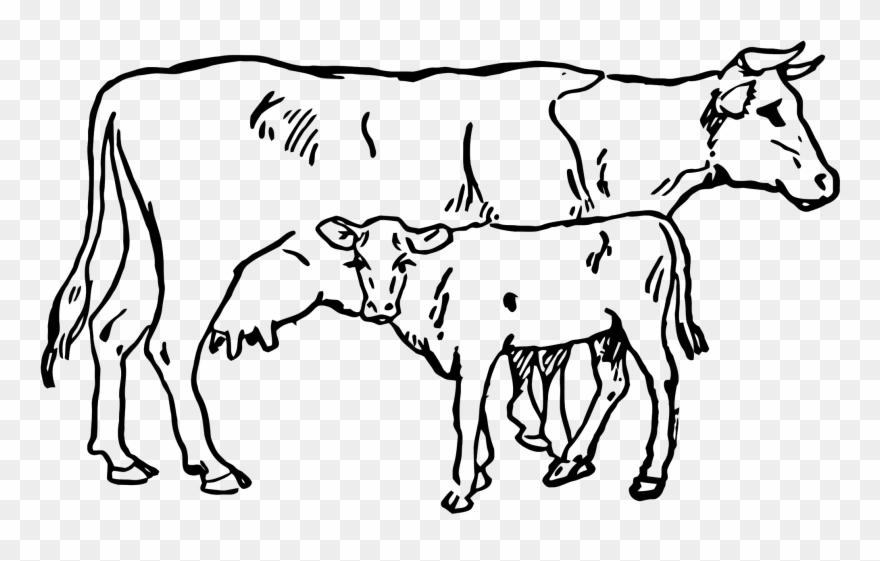 Beef Vector Cow Indian Clip Royalty Free Download Cow And Calf