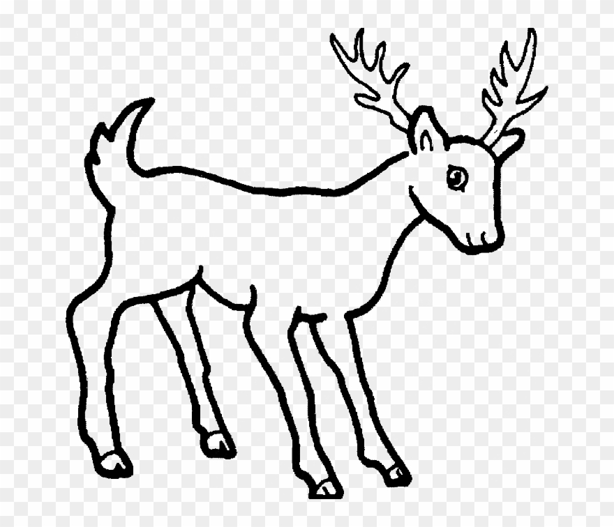 free coloring pages of mule to draw cartoon mule stubborn wild animals drawing easy clipart. Black Bedroom Furniture Sets. Home Design Ideas