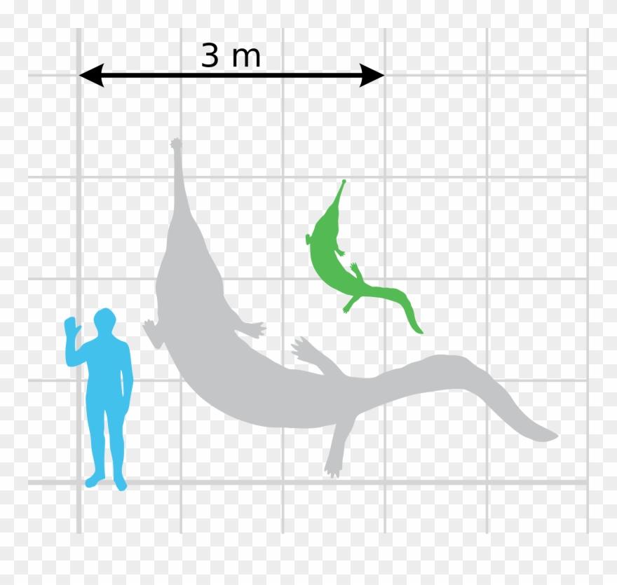 File Prionosuchus Scale Wikimedia Commons Open - Size Clipart ... 99799902c