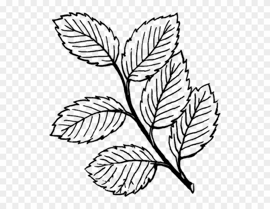 It is a photo of Epic Rose Leaf Drawing