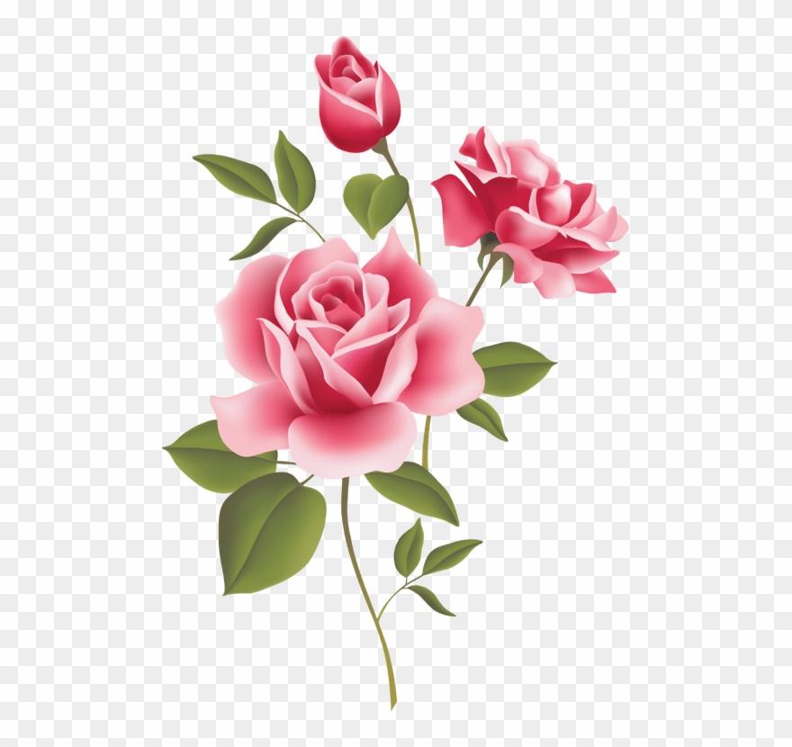 3d Rose Live Clipart Download - Transparent Pink Roses Border - Png Download