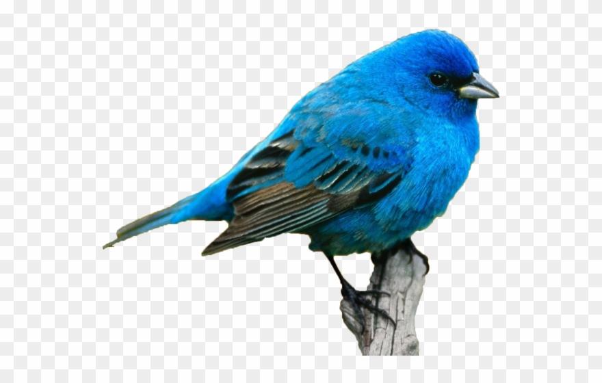 Birds realistic. Karimovaaa draw a blue
