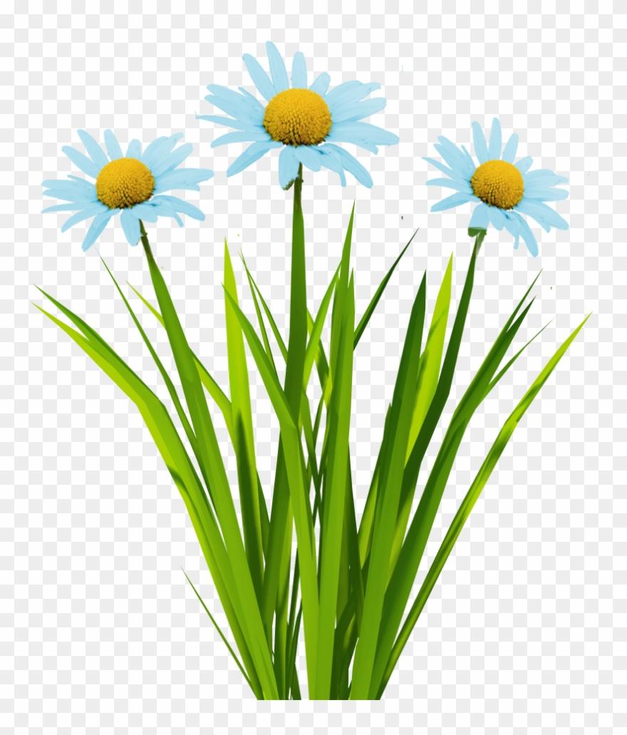 New Textures Billboard Grass - Grass Texture Unity 3d Clipart