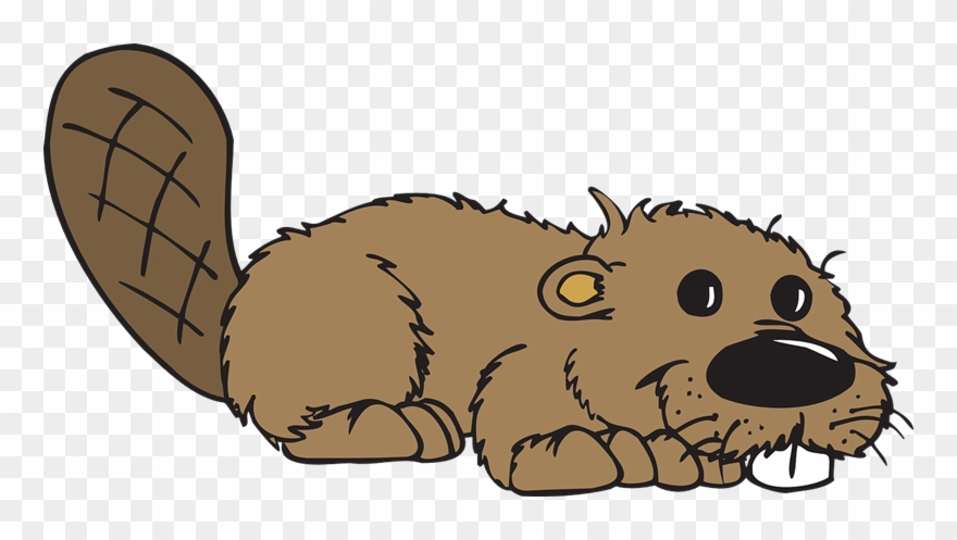 Beaver Clipart Free Sign Of The Beaver Gif Png Download 2039042 Pinclipart