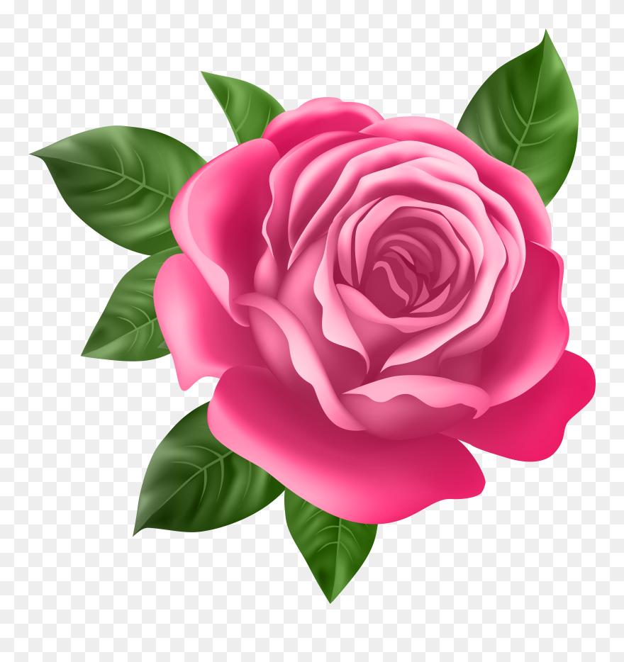 Magenta Single Rose Clip Art
