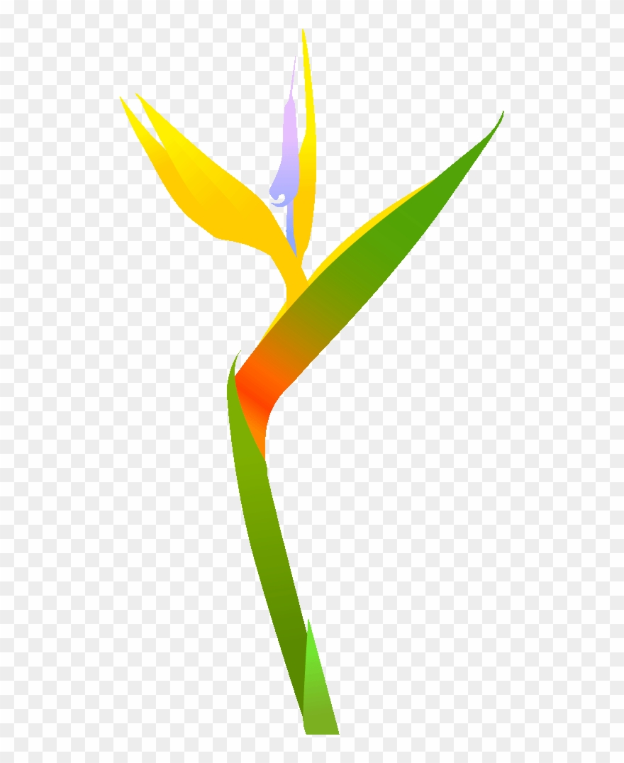 1 極楽鳥花 ス 南国 の 花 の イラスト Clipart Pinclipart