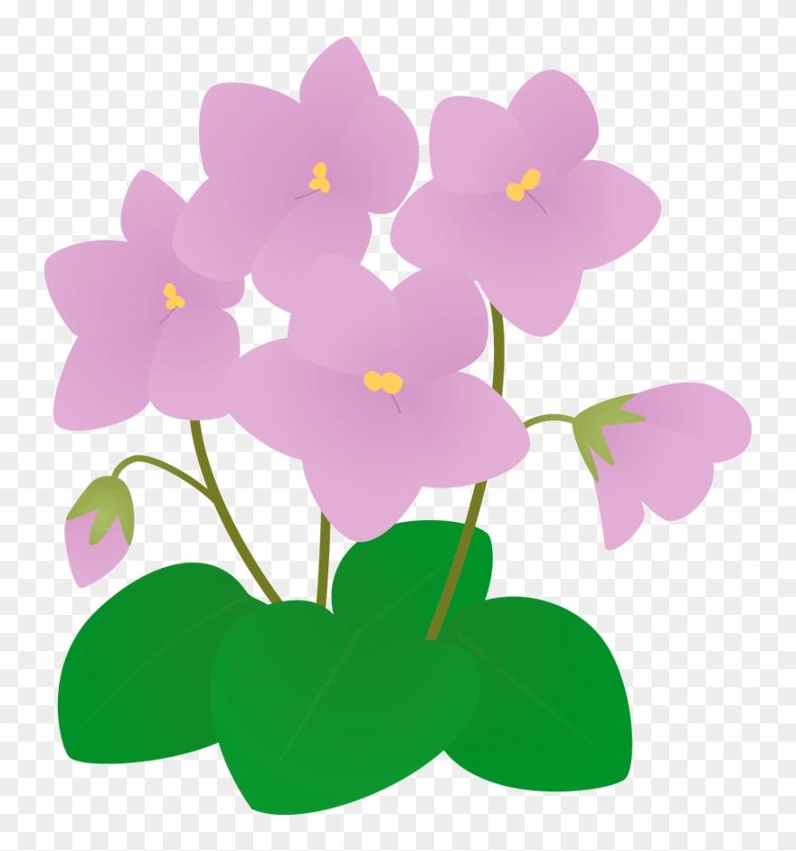 531 セントポーリ 冬 の 花 イラスト Clipart Pinclipart