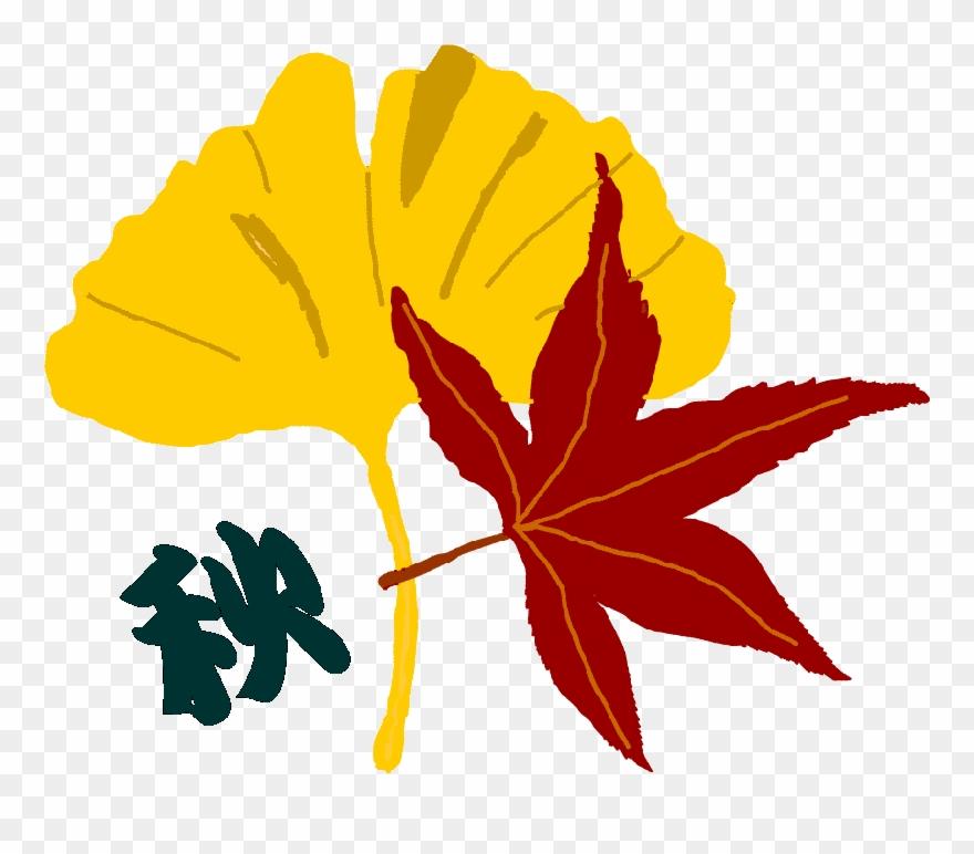 秋のイラスト 花や木の葉など 透過png画像 jpg画像 花 の 絵