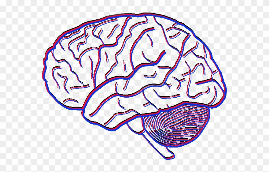 investigating the flexibility of empathy simple picture of a brain clipart 2206623 pinclipart simple picture of a brain clipart