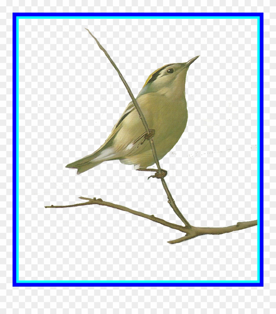 Clipart Birds Nightingale - Watercolor Painting - Png Download