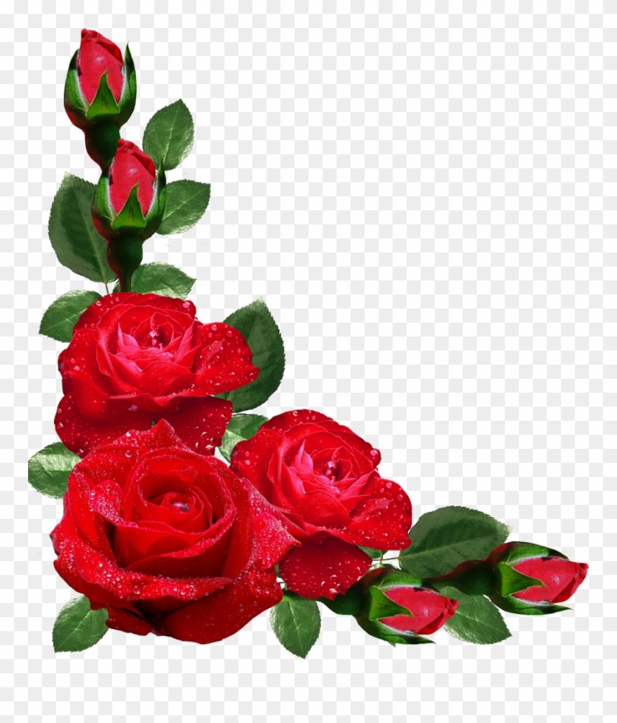 Roses Corner Border Clip Art Transparent Rose Flower Design Border Png Download 2215580 Pinclipart