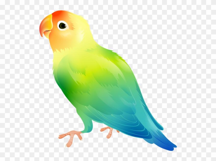 Birds parrot. Bird png clip art