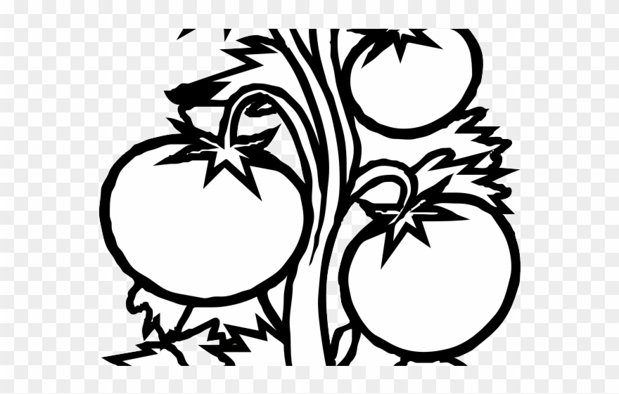 Potted Plants Clipart Black And White Tomato Plant Black And White