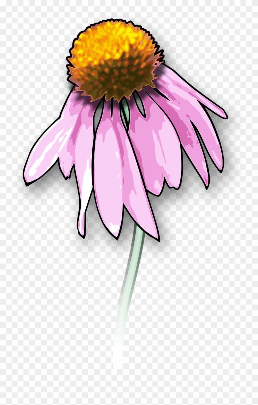 Free Flower2 Dead Flower Drawing Clipart 251035 Pinclipart
