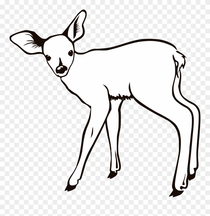 No Coloring Pages Doe The Deer Head Antlers Coloring Pages